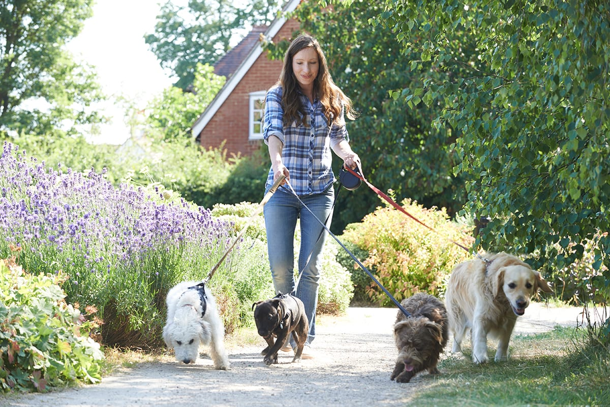Dog Sitter Walking Dogs