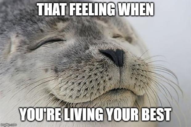 Seal Living Your Best Meme