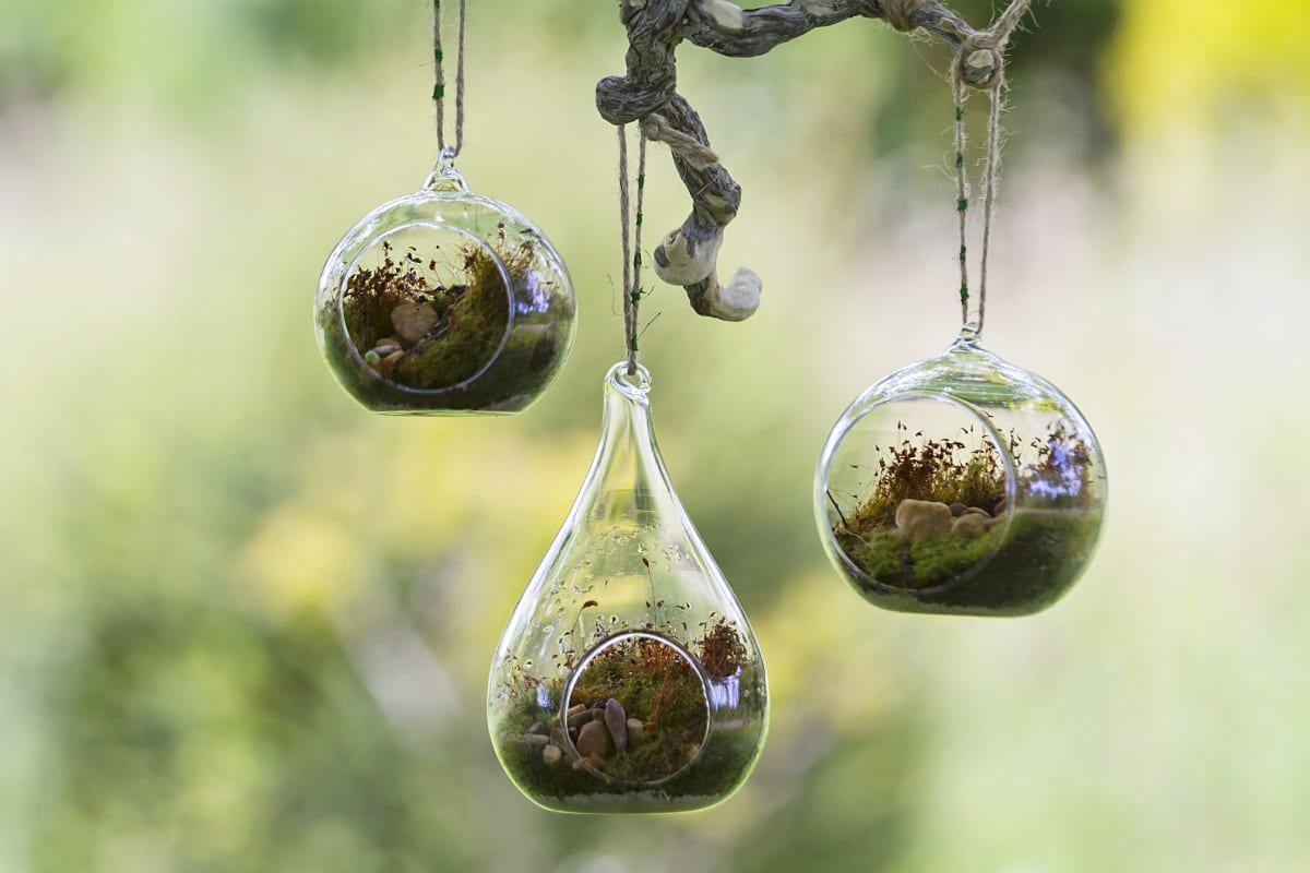 Terrariums Hanging From Tree