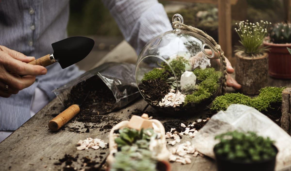 Adding Soil To Terrarium