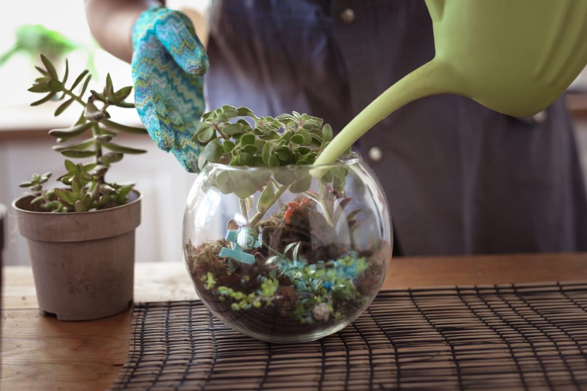 Watering Plant in Terrarium