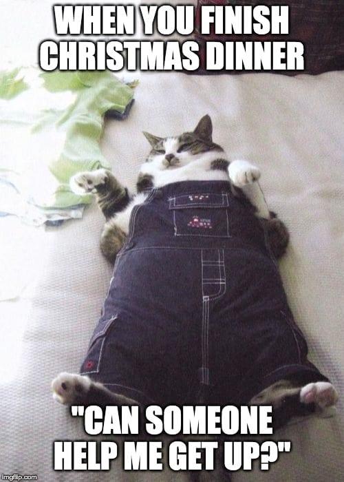 Fat Cat Meme