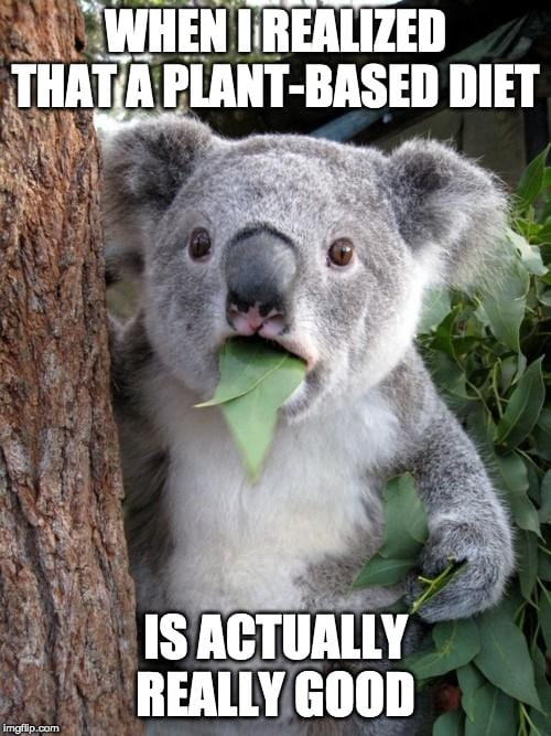 Suprised Koala Meme