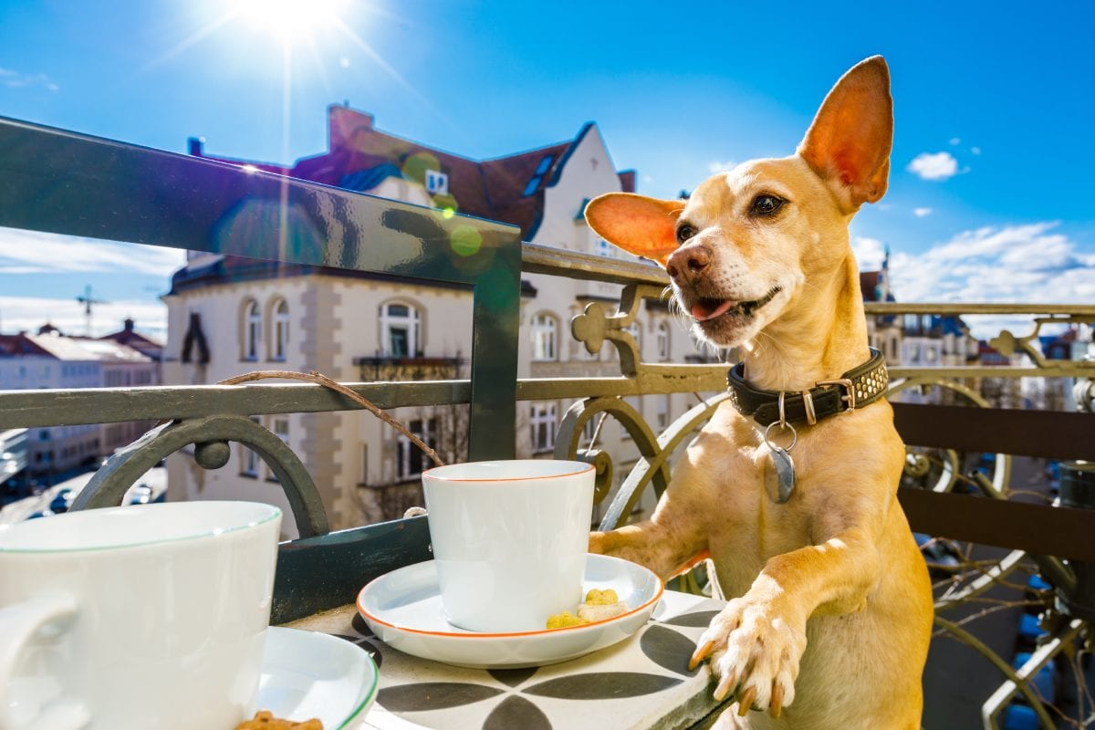 Dog Enjoying Coffee