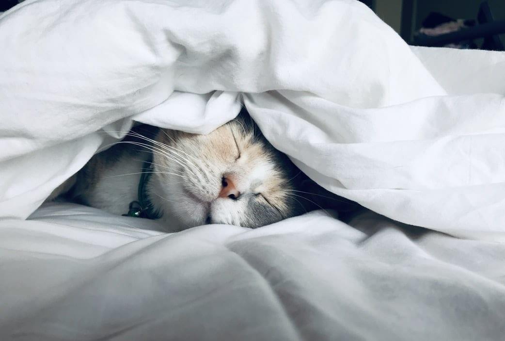 Peaceful Cat Sleeping
