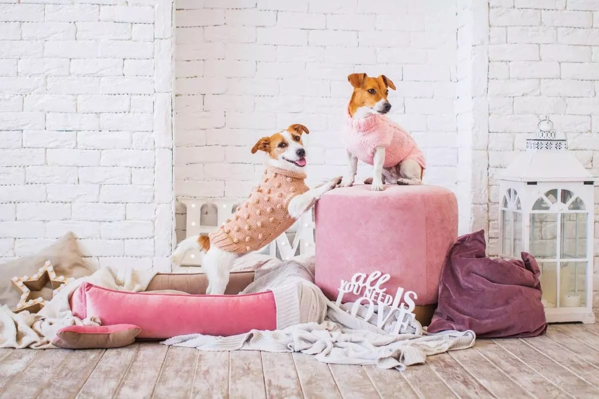 National Dog Day Feature Image